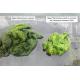 effet sur les algues après 7 jours